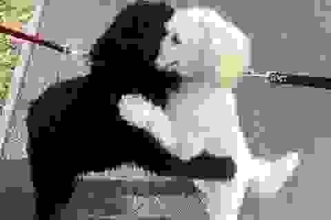 """Hình ảnh 2 chú chó ôm nhau gây """"bão mạng"""""""