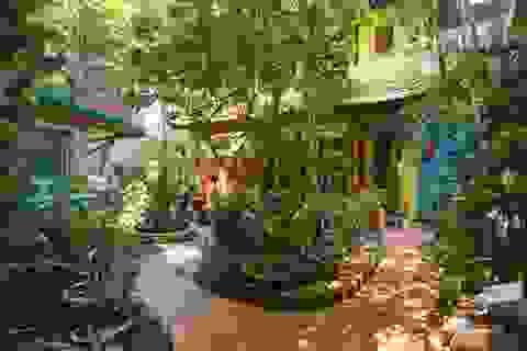 Biệt thự vườn rộng 700m2 của đại gia kim hoàn phố cổ Hà Nội một thời