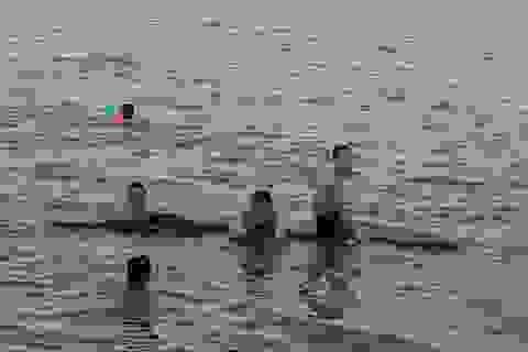 Dân ào ra sông Lam giải nhiệt, biển cảnh báo nguy hiểm liên tục bị nhổ bỏ