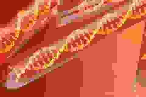 Tìm thấy bộ gen HIV dài nhất, cổ nhất từng được biết đến