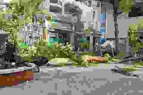 """Có nên chặt cây """"bất chấp"""" sau vụ cây đổ trong sân trường đè chết học sinh?"""