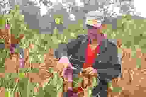 Nắng hạn kéo dài, hàng ngàn ha cây trồng chết khô vì thiếu nước