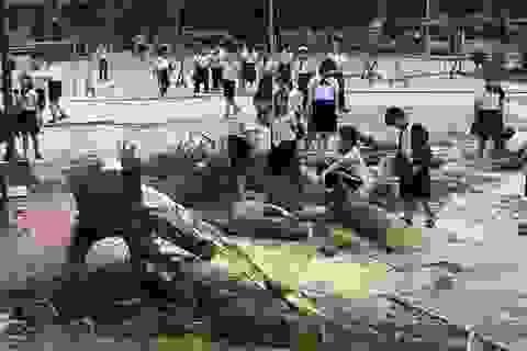 Lại một cây phượng cao hơn chục mét bật gốc trong trường tiểu học