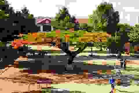 Sợ nguy hiểm cho học sinh, nhà trường căng dây chắn 2 cây phượng lâu năm