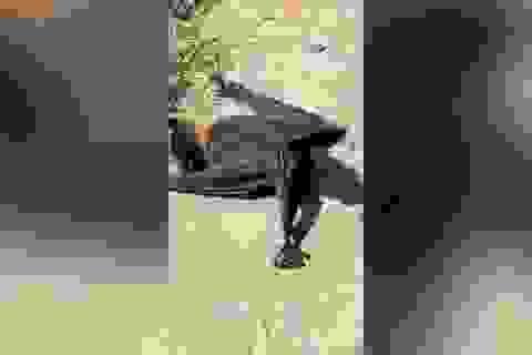 Kỳ lạ hiện tượng hàng trăm con dơi đang bay thì rơi xuống đất giữa ban ngày