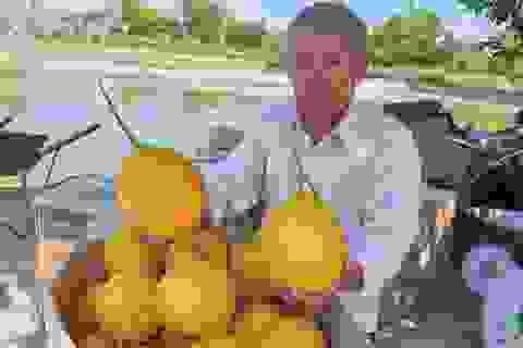 U70 trồng dưa vàng công nghệ cao, ngay vụ đầu đã bỏ túi gần 50 triệu