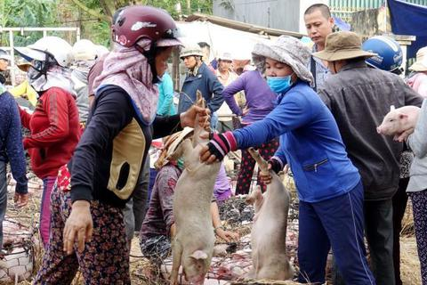 Giữa mùa khan hiếm, đắt đỏ tìm về chợ heo giống độc nhất Việt Nam