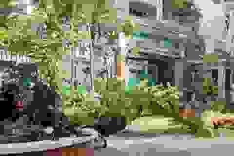 """Sân trường """"hụt hẫng"""" khi cây xanh bị đốn hạ, tỉa trụi cành"""