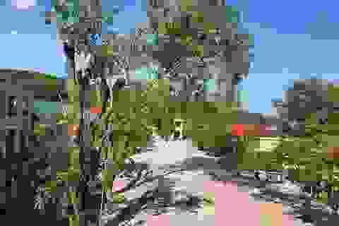 Trường chặt cây xà cừ 40 năm tuổi: Kiểm điểm trách nhiệm cá nhân, tập thể