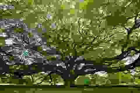"""Các khu rừng trên khắp Trái đất đang ngày càng """"trẻ hoá"""""""