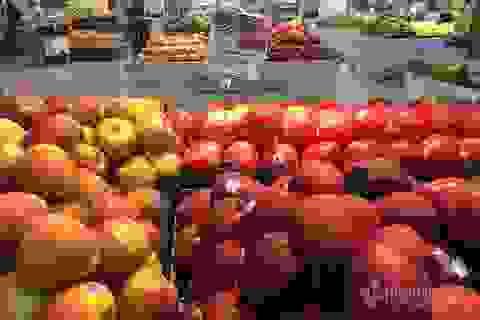 Trái cây Mỹ, Úc siêu rẻ, giá mấy chục ngàn đồng mỗi kg bày bán la liệt