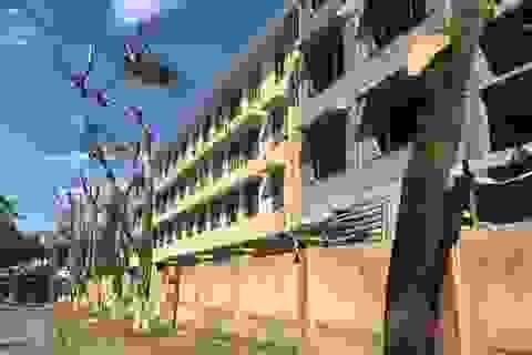 Hàng chục cây xanh quanh trường học bị cắt cụt ngọn