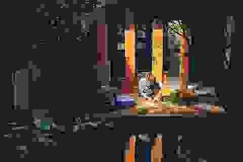 """Gia đình trẻ ở Đà Nẵng """"làm vườn"""", nuôi cá trong biệt thự giữa phố"""