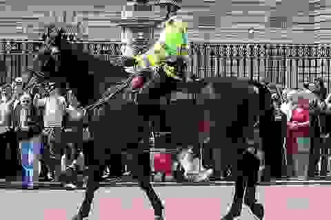 Các đội cảnh sát kỵ binh trên thế giới