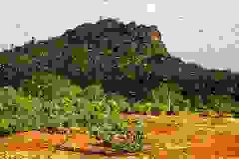 Bầy châu chấu ở Đông Phi khiến gần 5 triệu người đối mặt với nạn đói