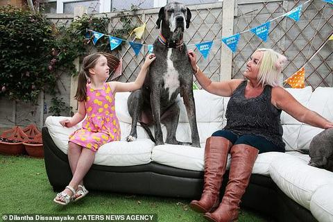 Chú chó cao nhất thêm kỷ lục sống thọ nhất