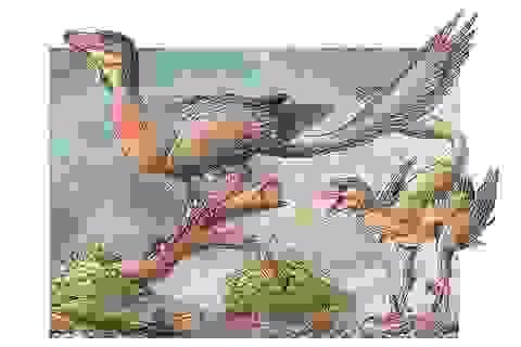 Tìm thấy hóa thạch của loài kết nối giữa khủng long và chim