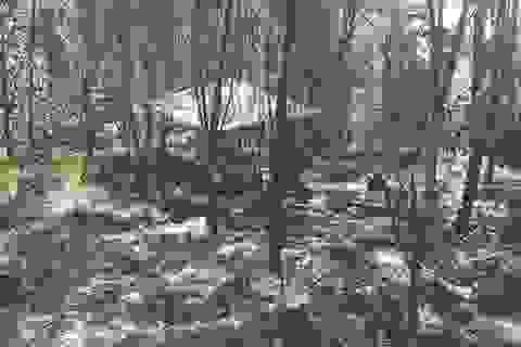 Hé lộ nguyên nhân cái chết cháu bé 5 tuổi trong rừng