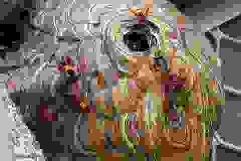 Cà Mau: Người đàn ông tử vong vì bị ong vò vẽ đốt hơn 100 vết