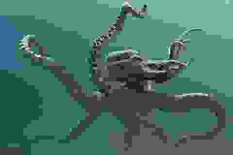 Bí ẩn về sự tồn tại của quái vật Kraken