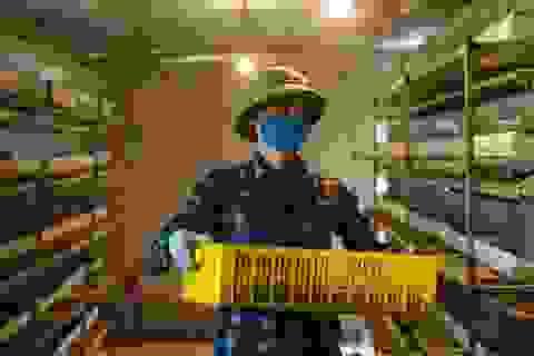Cử nhân bỏ việc về quê nuôi chim cút, thu tiền tỷ mỗi năm