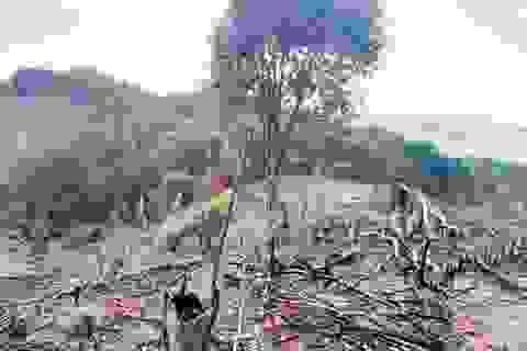 Thừa Thiên - Huế: Sự thật sau con số 2 năm mất hơn 800 ha rừng tự nhiên