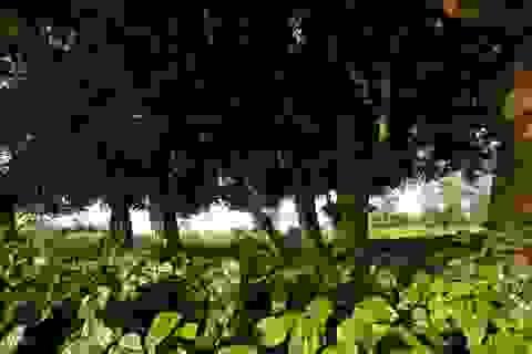 Rặng cây duối cổ hơn 1000 năm tuổi ở Hà Nội