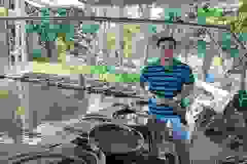 Nuôi cá thát lát cườm đặc sản thành công, một nông dân thu 1,5 tỷ đồng mỗi năm