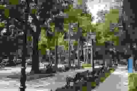 Cận cảnh vườn hoa kiểu mẫu hơn 5 tỷ đồng ở trung tâm Hà Nội