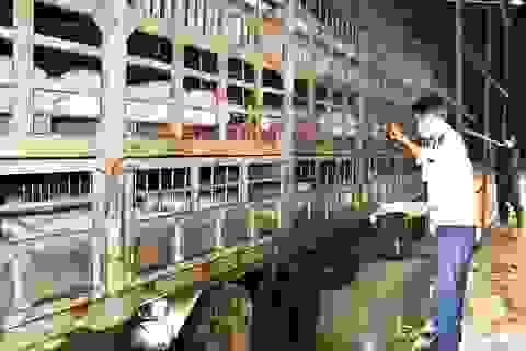 """Chưa kịp nhập, giá lợn hơi tại Thái Lan đã tăng đến mức """"khó mua"""""""