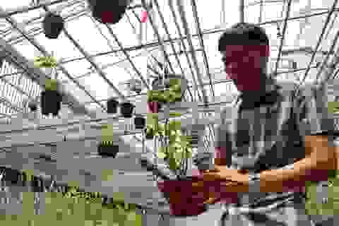 Gặp người  mua 3 cây lan đột biến gene giá 32 tỷ đồng ở Bình Phước