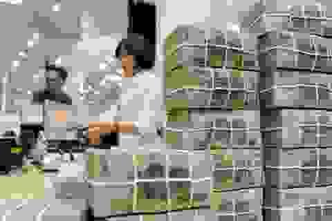 TPHCM: Kiến nghị khởi tố 20 doanh nghiệp nợ đóng bảo hiểm xã hội