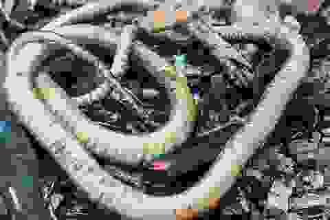 Phát hiện bằng chứng con người ăn thịt rắn cách đây 15.000 năm