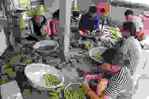 Hà Tĩnh: Cả làng trồng sen, chỉ bán hạt cũng lãi gấp đôi so với cấy lúa