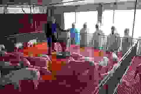 """Cần làm gì để """"hạ nhiệt"""" giá thịt lợn?"""