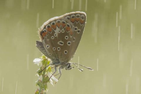"""Lớp """"giáp"""" trên đôi cánh bảo vệ côn trùng khi trời mưa như thế nào"""