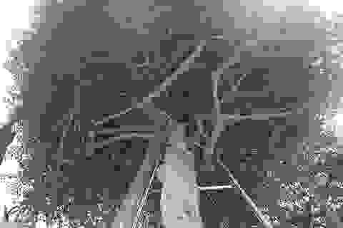 Loại cây mọc hoang ven đường, đại gia mua giá 3 tỷ đồng gây xôn xao