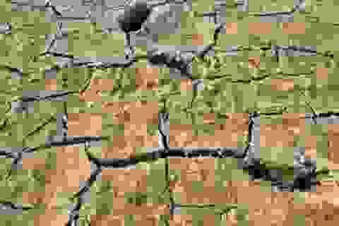 Người dân phải bỏ hoang hàng nghìn ha đất vì nắng hạn