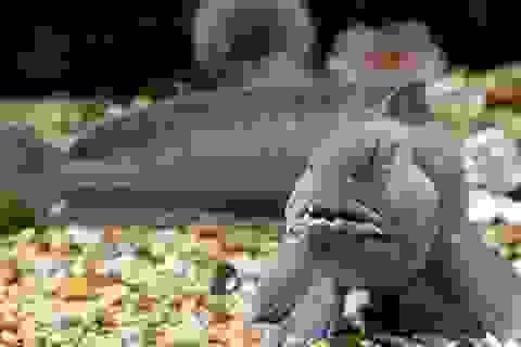 10 sinh vật ở đáy biển khiến bạn mất ngủ vì kinh sợ