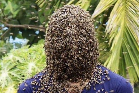 Kinh dị người đàn ông cho hàng nghìn con ong bu kín mặt