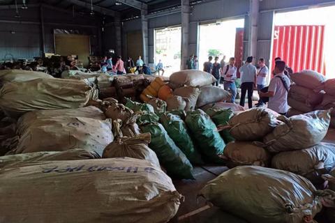 Hơn 100 tấn thảo dược Trung Quốc đội lốt táo, củ cải, cà rốt vào Việt Nam
