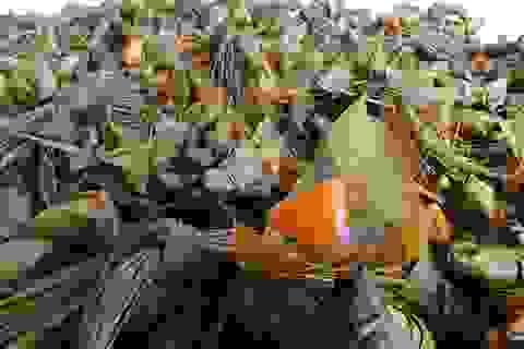 Nhộn nhịp chợ Tết mùng 5 ở Đà Nẵng