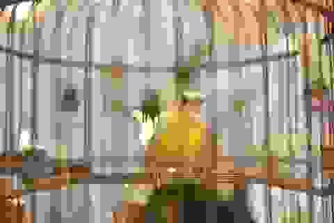 Mãn nhãn với bộ sưu tập chim quý hiếm, giá khủng của vua chim màu Việt