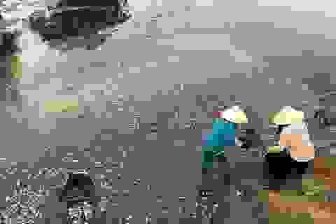 Nắng nóng khiến cá chết nổi trắng mặt hồ