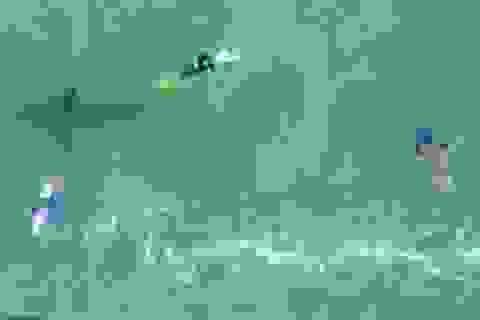Video: Hoảng hồn phát hiện cá mập trắng lớn bơi… ngay dưới chân