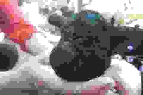Cừu con chào đời chỉ có 1 mắt