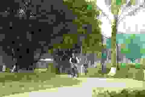 Vì sao chất lượng không khí ở Ecopark lại sánh ngang châu Âu?