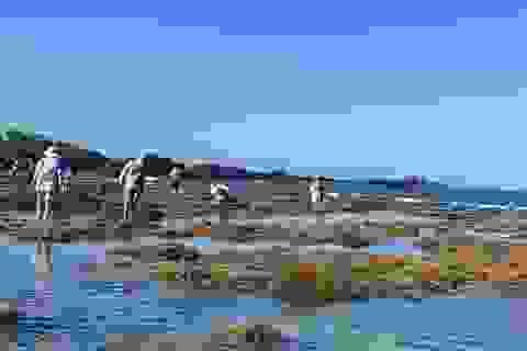 Quảng Ngãi: Rặng san hô tuyệt đẹp tại gành Yến bị xâm hại