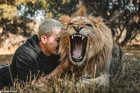 Cố vấn tài chính bỏ việc lương cao về sống cùng sư tử