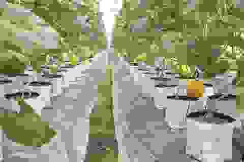 8X biến đồng trũng thành khu nông nghiệp công nghệ cao, thu hàng trăm triệu đồng
